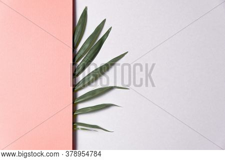 Tropical plant leaf on pink and white paper background. Flat lay, top view, minimal design template with copyspace.
