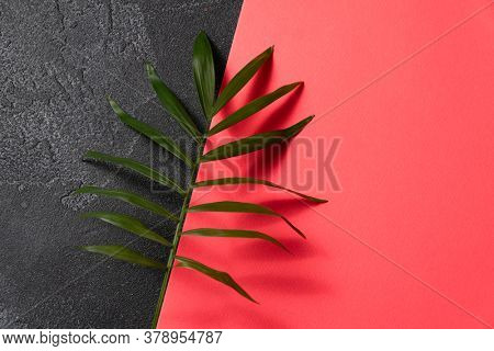 Green plant leaf on dark concrete and pink paper background. Flat lay, top view, minimal design, business card template with copyspace.