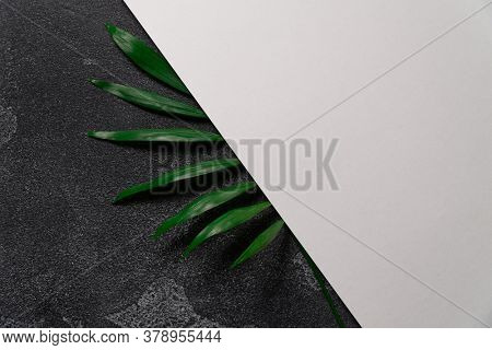 Green plant leaf on dark concrete background and sheet of white paper. Flat lay, top view, minimal design template with copyspace.