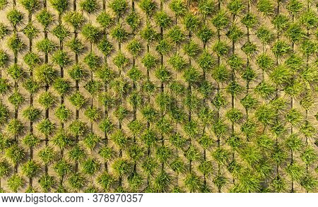 Fresh Green Grass In Turf Block For Decorate Backyard Lawn In Garden, Top View Image