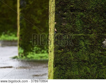 Bottom Of Concrete Pillars With Green Moss