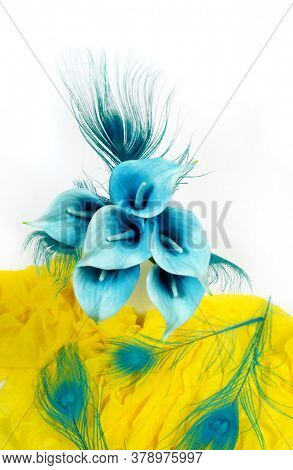 Blue calla lilies on a white and yellow background. St. Valentine's Day. Beautiful blue flowers