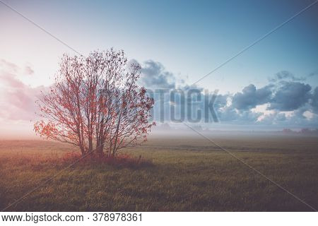 Tree Foliage In Morning Light With Sunlight