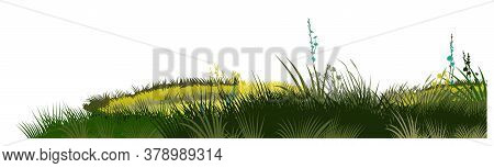 Grass, Meadow. Vector. Juicy Summer Herbs On A Transparent Background. Isolated Object.