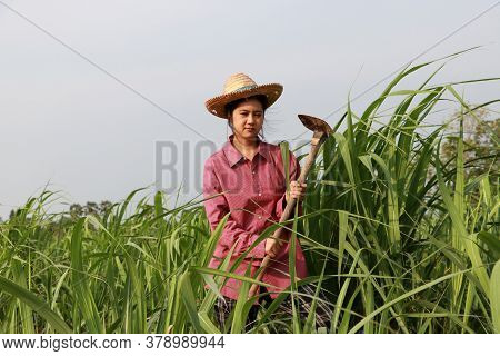 Woman Farmer With Hoe In Hand Working In The Sugarcane Farm And Wearing A Straw Hat With Red Long-sl