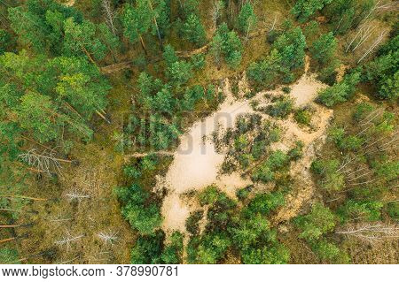 Belarus. Aerial View Of Mixed Forest. Afforestation. Entry Of Sandy Soil In Forest. Drone View Of Eu