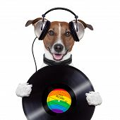 music headphone vinyl record dog holding it  mouth opened poster