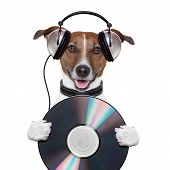 music headphone cd dog holding it  mouth opened poster