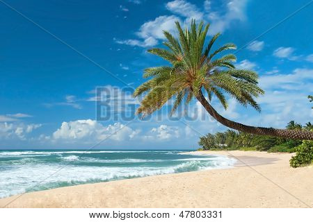 Untouched Sandy Beach With Palms Trees And Azure Ocean In Background