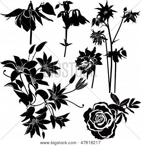 flowers of clematis, roses, columbine