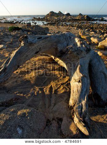 Drift Wood And Rocky Island