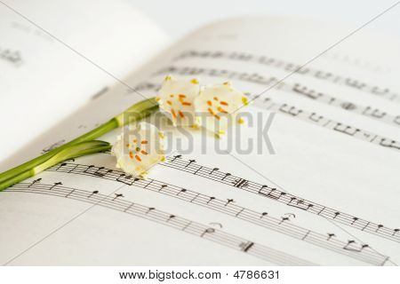 Flower And Notes