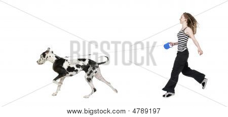 young girl walking his dog (Great dane 4 years) harlequin Great Danein front of a white background poster