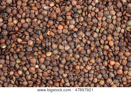 Background of dried french lentils