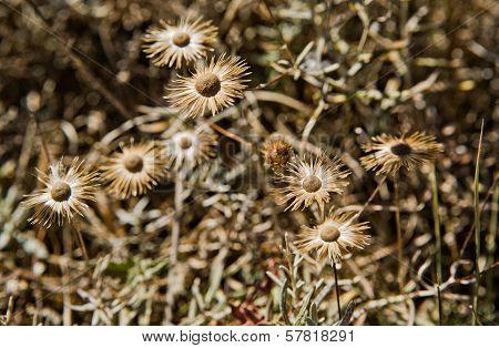 Cape Espichel Flora