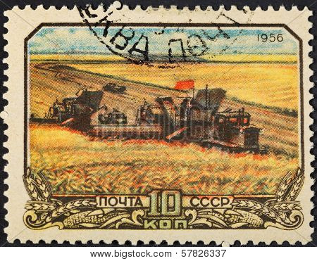 Harvesting Wheat In Soviet Russia