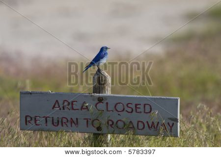 Area Closed Except For Blue Birds