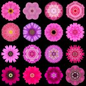 Big Collection of Various Purple Flowers. Kaleidoscopic Mandala Patterns Isolated on Black Background. Concentric Rose Daisy Primrose Sunflower Carnation Marigold Gerber Dahlia Zinnia Flowers in Yellow and Purple colors. poster