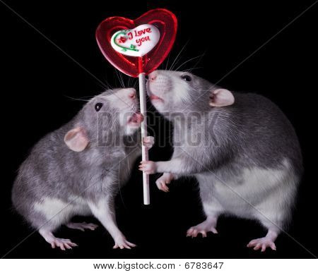 "Two rats are holding a valentine lollipop that says ""I love you"" poster"