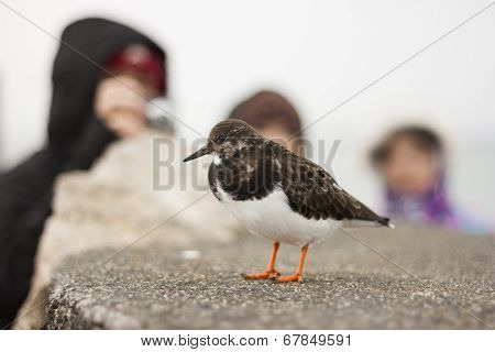 People Watching A Bird