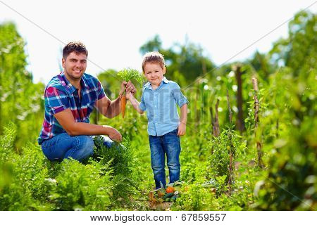 Farmer Family Harvesting Vegetables In Garden