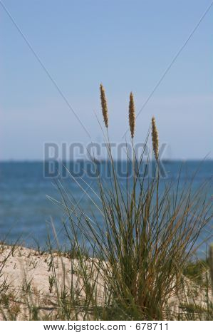 Sea Grass On Sand Dune With Sea Behind