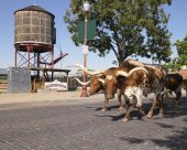 Longhorn cattle walking down street with water storage tower in background. Horizontal shot. poster