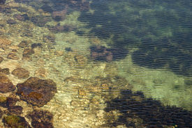 Algae-covered Stones Under The Water