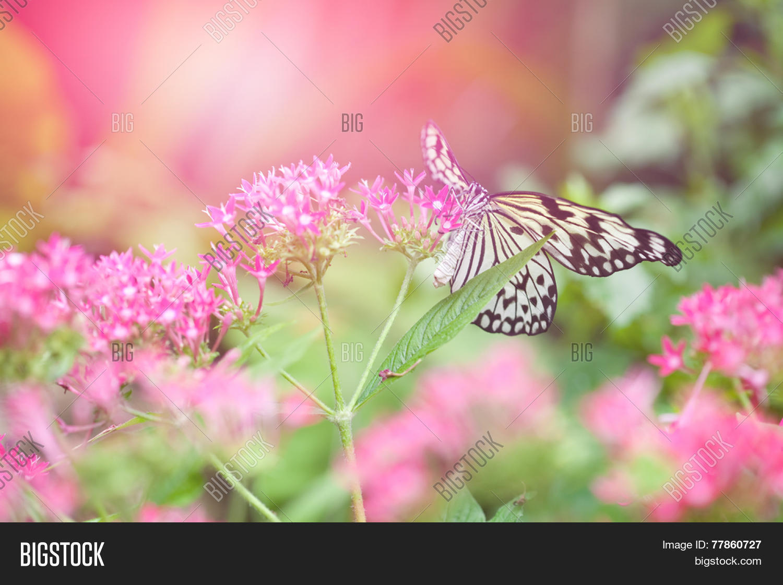 Beautiful Paper Kite Image Photo Free Trial Bigstock