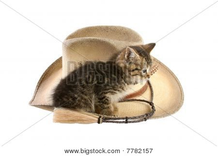 Kitten sitting on cowboy hat