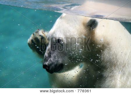 A polar bear under water waving poster