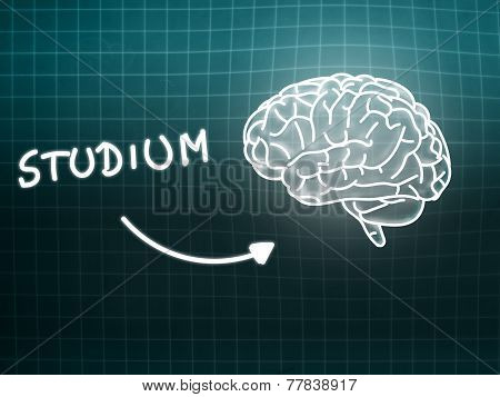 Studium Brain Background Knowledge Science Blackboard Turquoise