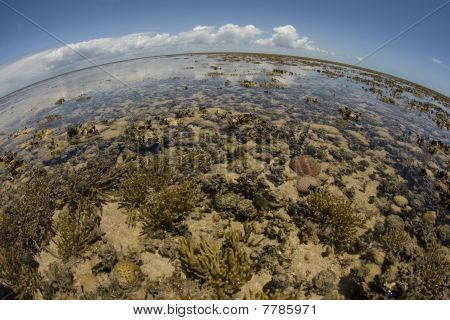 panoramic view of a coral reef at low tide during day ligt in a sunny day. poster