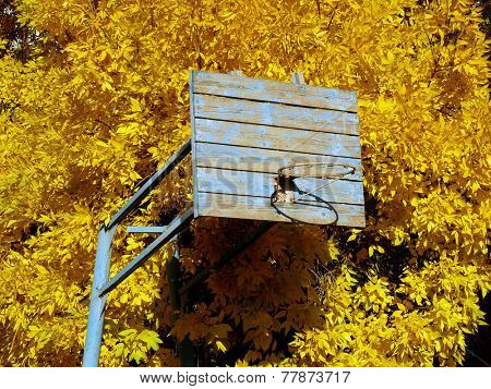 old basketball backboard against autumnal tree