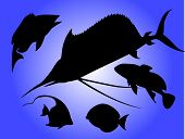 Fish silhouettes poster