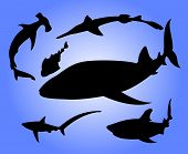 Sharks silhouettes poster