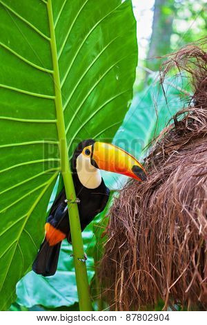 Large bird with bright plumage and a huge yellow beak. Toco toucan in the reserve of exotic tropical birds
