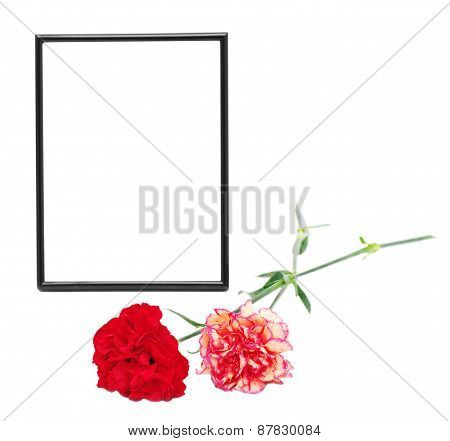 two carnations and black framing