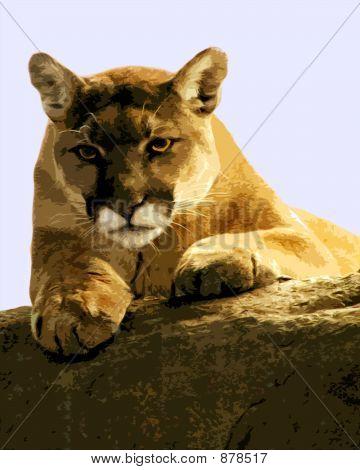 Puma Lioness