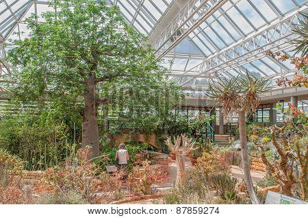 Conservatory At Kirstenbosch National Botanical Garden.