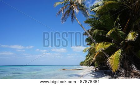 Beach On Isla (isle) Saona In The Dominican Republic