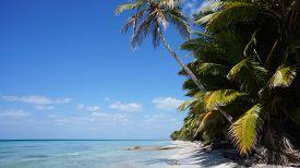 Beach On Isla (isle) Saona In The Dominican Republic