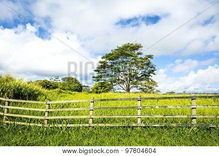 A vibrant, green meadow behind a ranching fence shows the lush growth in a rural farming community on Kauai Hawaii.