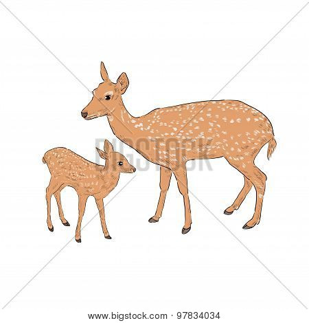 Female deer with a fawn