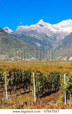 vineyards in Ardon region, canton Valais, Switzerland poster