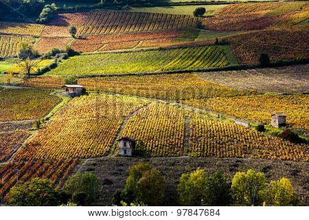 vineyards near Beaujeu, Beaujolais, Rhone-Alpes, France