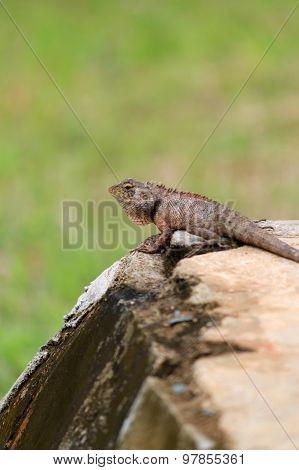A Garden Lizard On A Green Background
