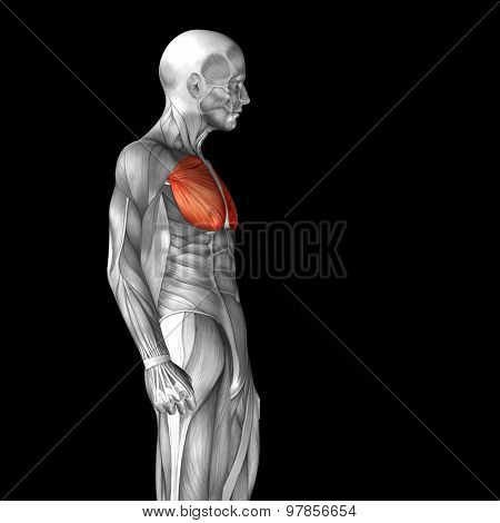 Concept or conceptual 3D chest human anatomy or anatomical and muscle isolated on black background poster