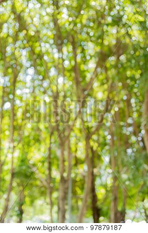 Green bokeh defocus art abtracts background from trees
