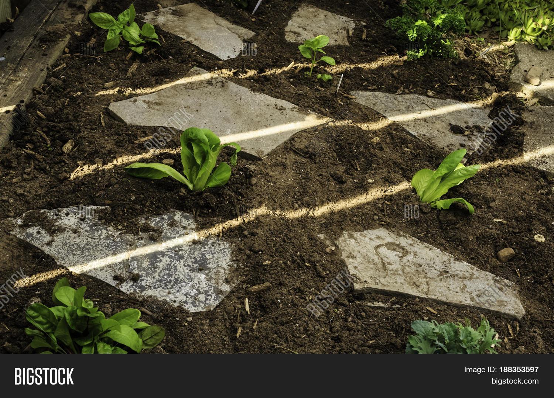 Help Tend Garden, Flat Image & Photo (Free Trial)   Bigstock